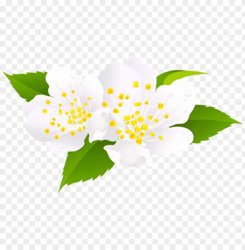 free PNG Download spring bloom png images background PNG images transparent