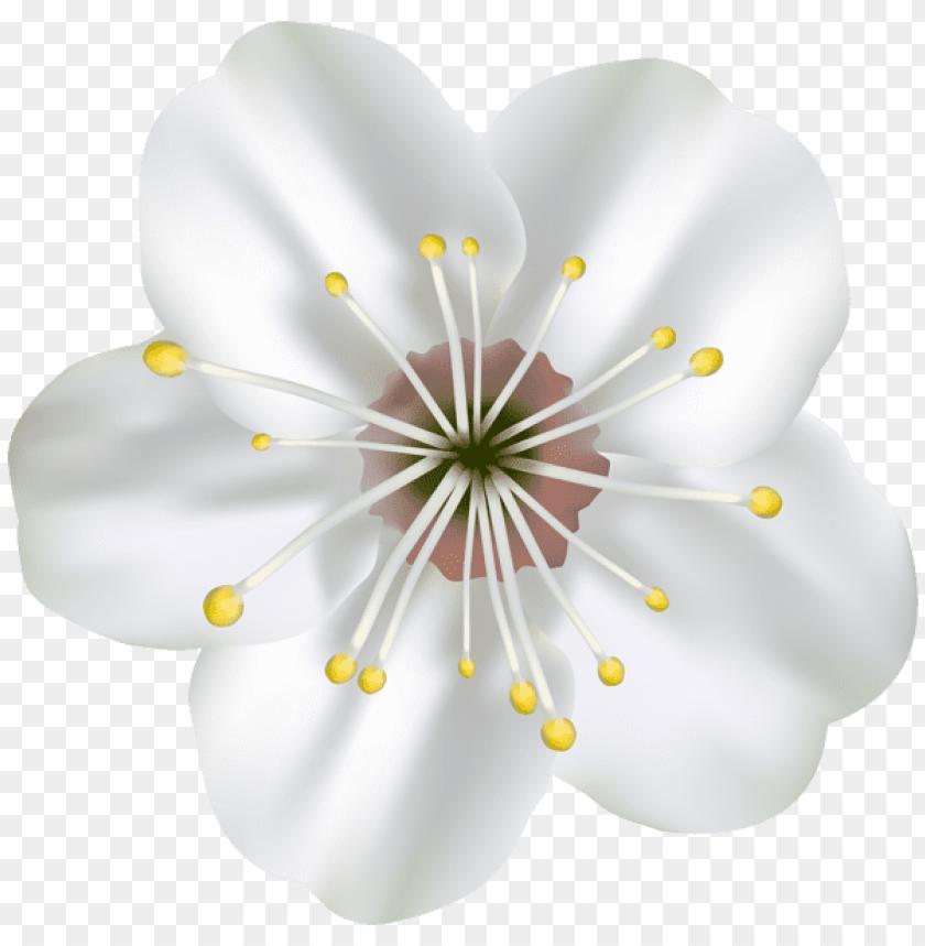 free PNG Download spring blooming flower png images background PNG images transparent