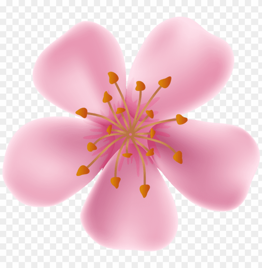 free PNG Download spring blooming flower png images background PNG images transparent