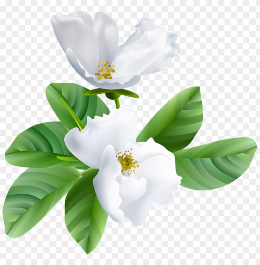 free PNG Download spring blooming transparent png images background PNG images transparent