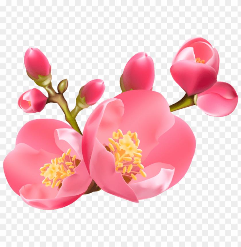 free PNG Download spring blossom transparent png images background PNG images transparent