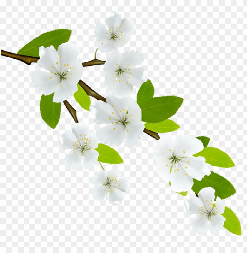 free PNG Download spring branch png images background PNG images transparent
