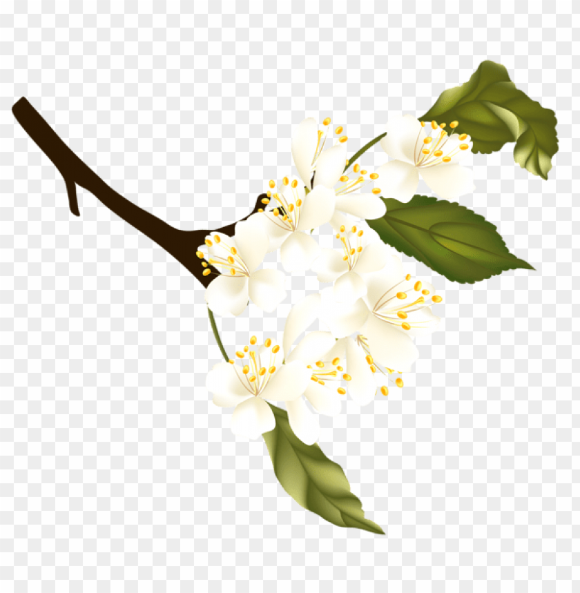 Download spring branch element png images background@toppng.com