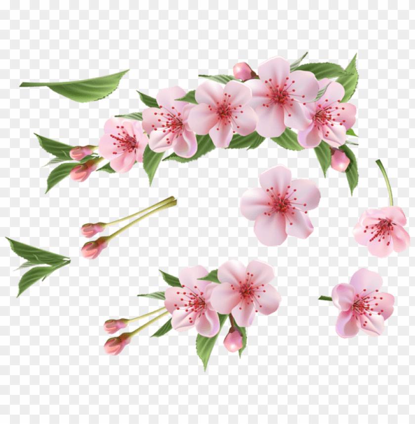 free PNG Download spring branch pink elements png images background PNG images transparent