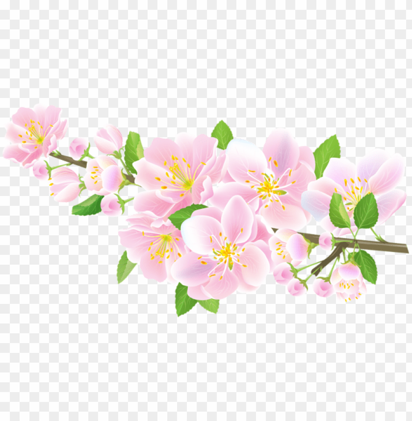 free PNG Download spring branch pink transparent png images background PNG images transparent