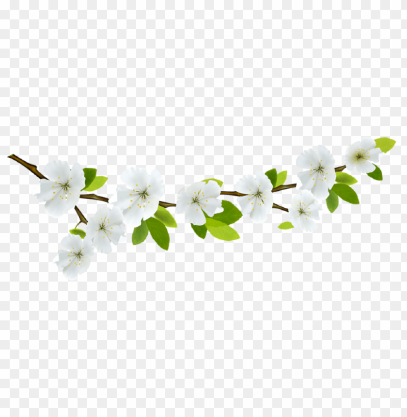 free PNG Download spring branch white png images background PNG images transparent