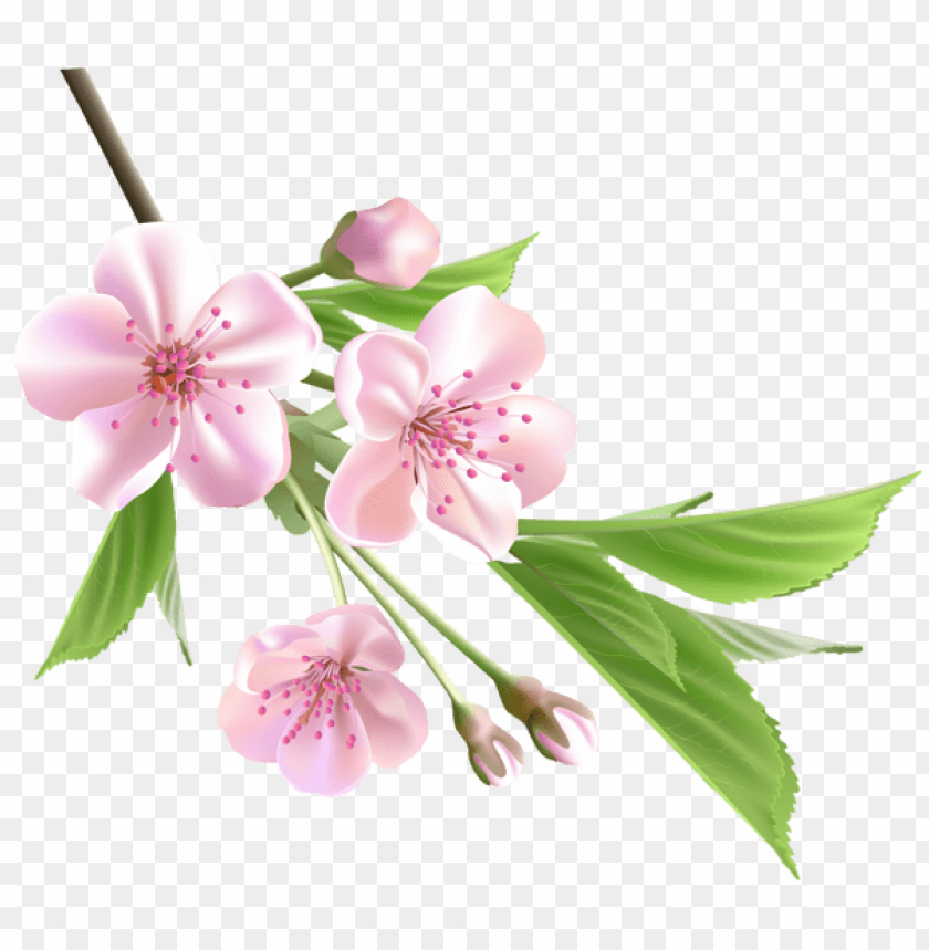 free PNG Download spring branch with pink tree flowers png images background PNG images transparent