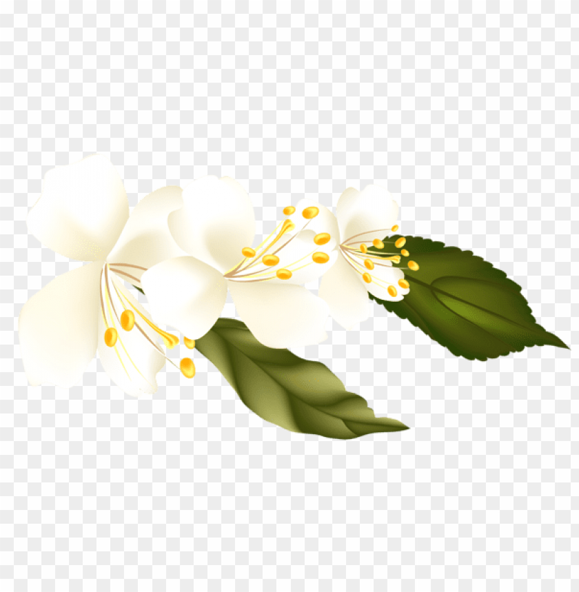 free PNG Download spring branchelement picture png images background PNG images transparent