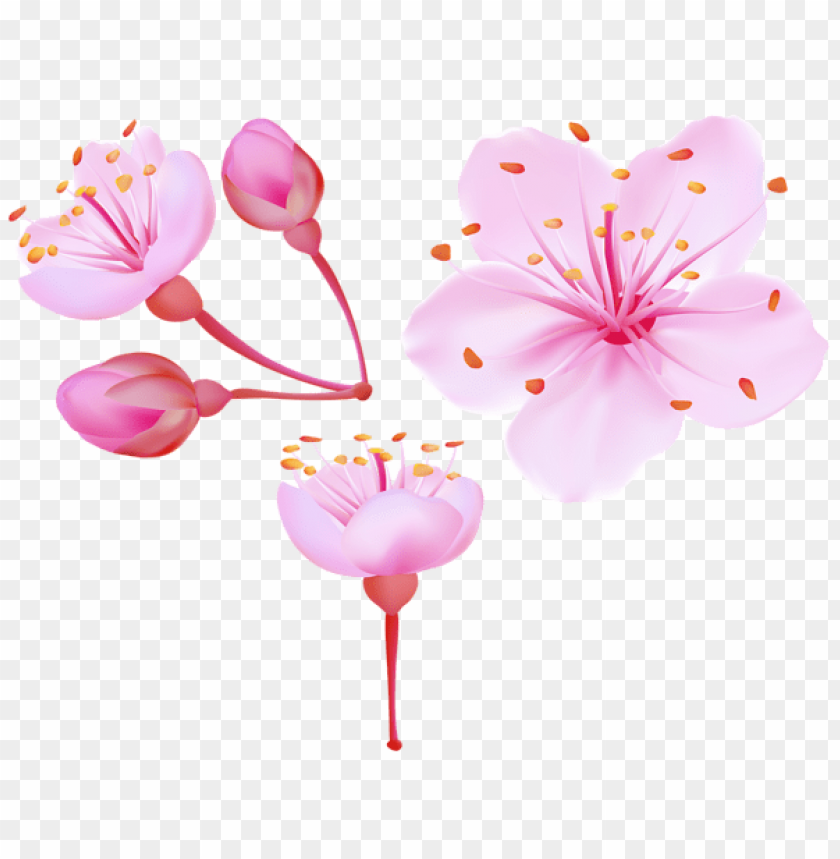 free PNG Download spring cherry blossoms png images background PNG images transparent