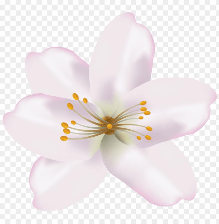 free PNG Download spring flower png images background PNG images transparent