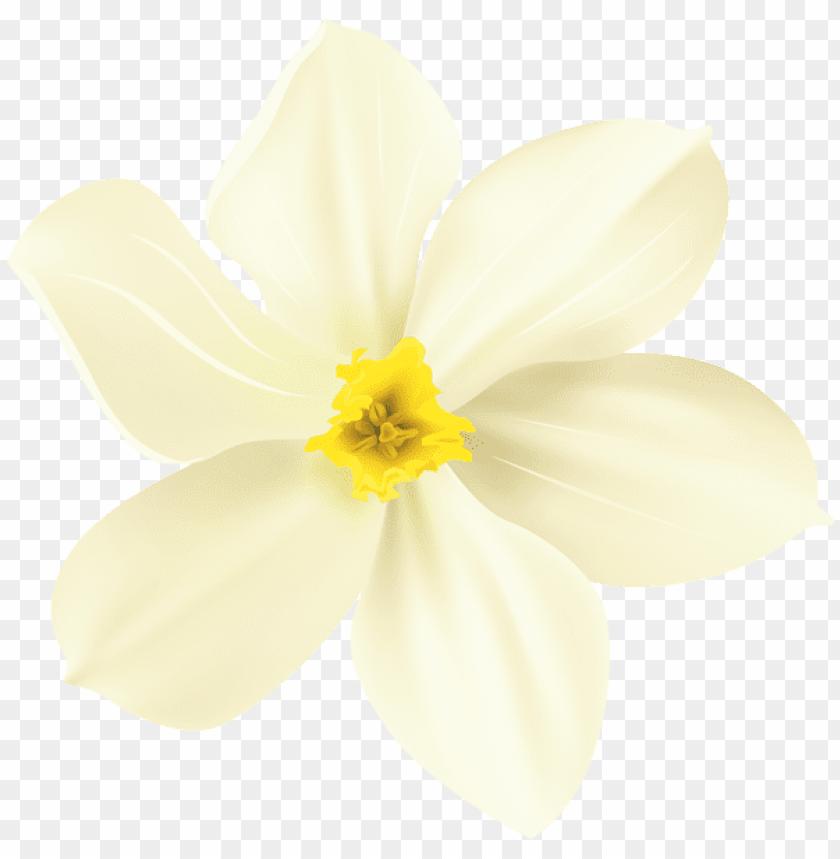 free PNG Download spring flower decorative transparent png images background PNG images transparent