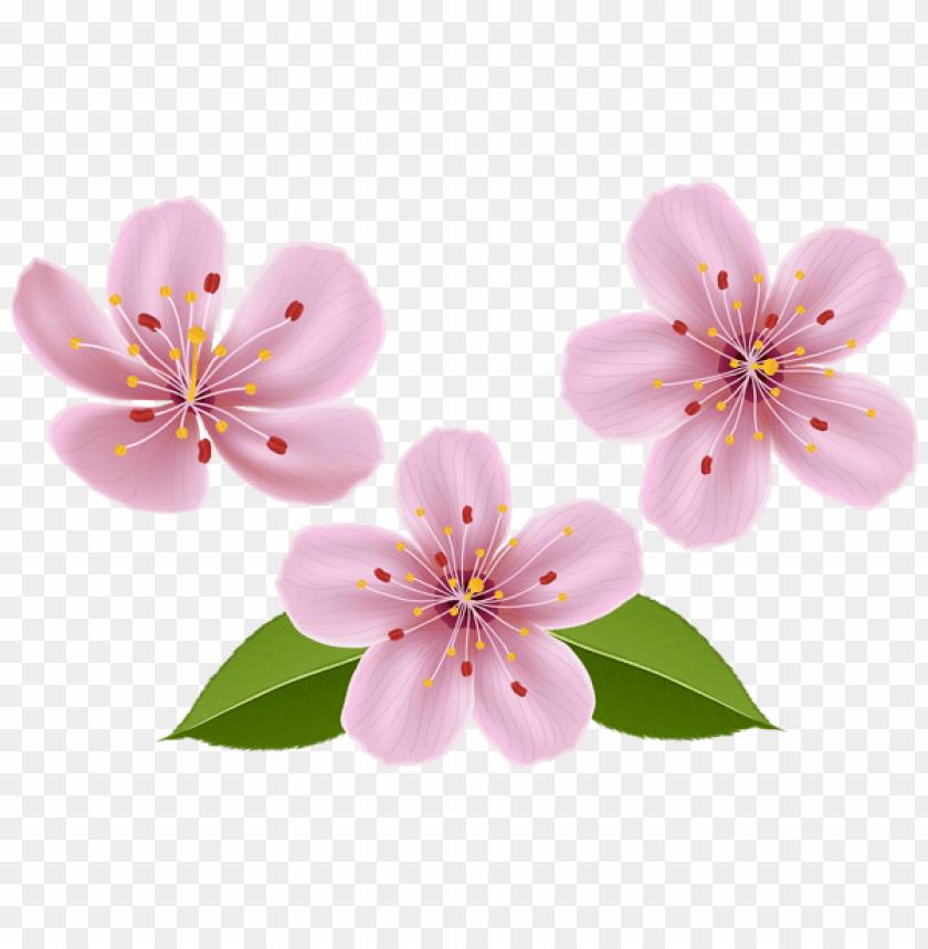 free PNG Download spring flowers png images background PNG images transparent