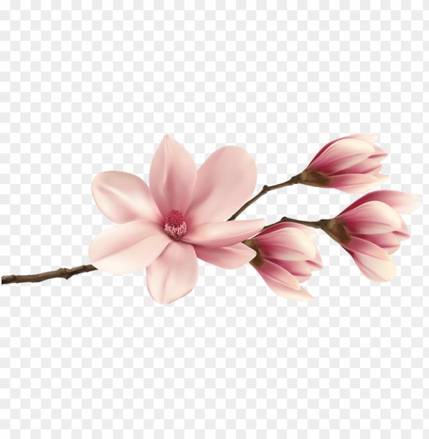free PNG Download spring magnolia branch png images background PNG images transparent