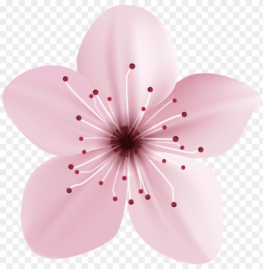 free PNG Download spring pink flower png images background PNG images transparent