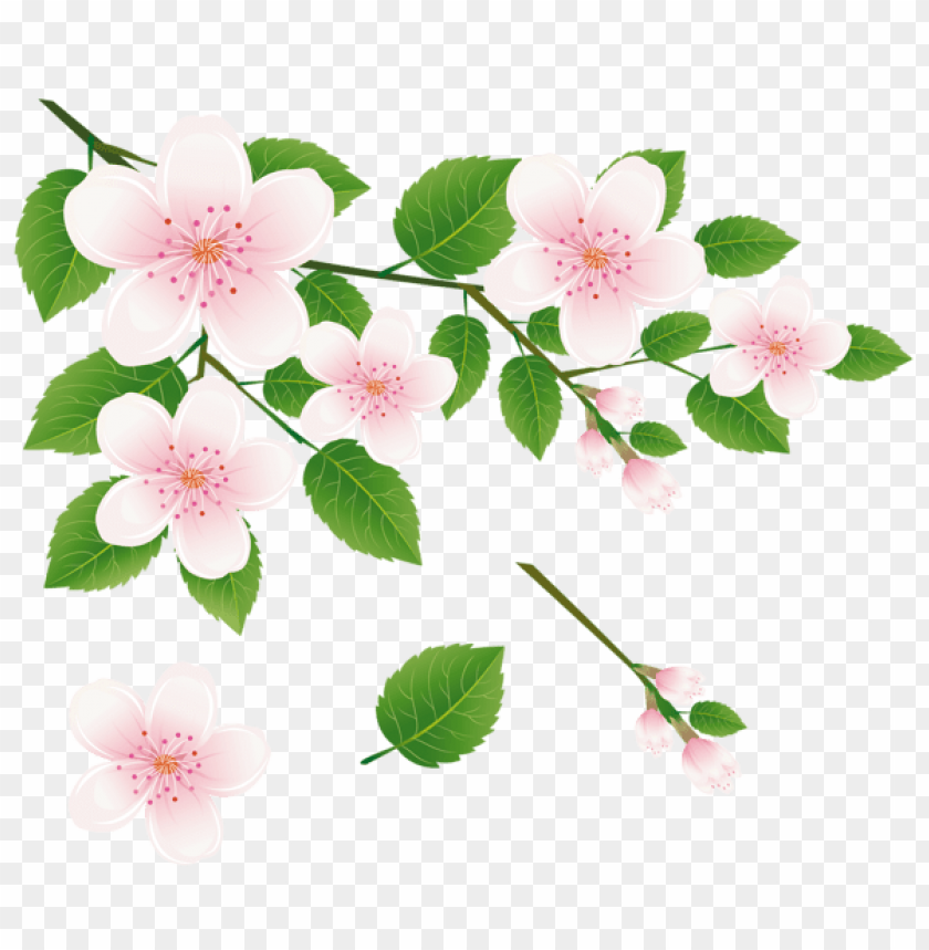 free PNG Download spring tree branch with flowerspicture png images background PNG images transparent