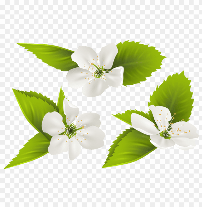 Download spring tree flowers png images background@toppng.com