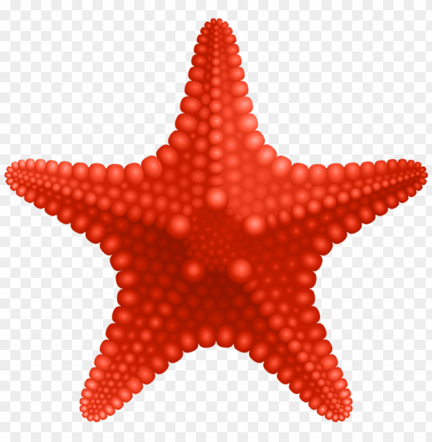 free PNG starfish PNG images transparent