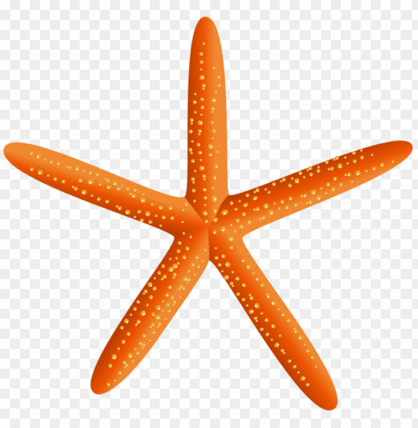 free PNG Download starfish transparent clipart png photo   PNG images transparent