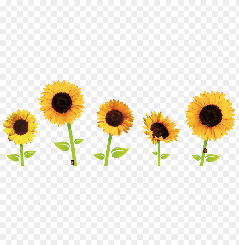 Картинки по запросу sunflowers png