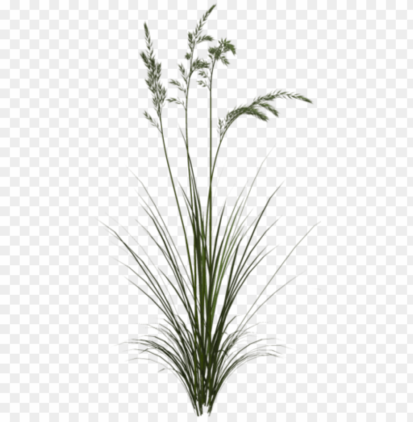 free PNG sweet grass PNG image with transparent background PNG images transparent
