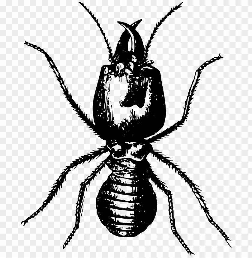 free PNG Download termite transparent images png png images background PNG images transparent