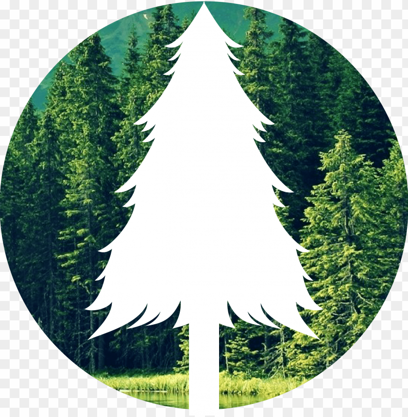 free PNG the forest png - save forest PNG image with transparent background PNG images transparent