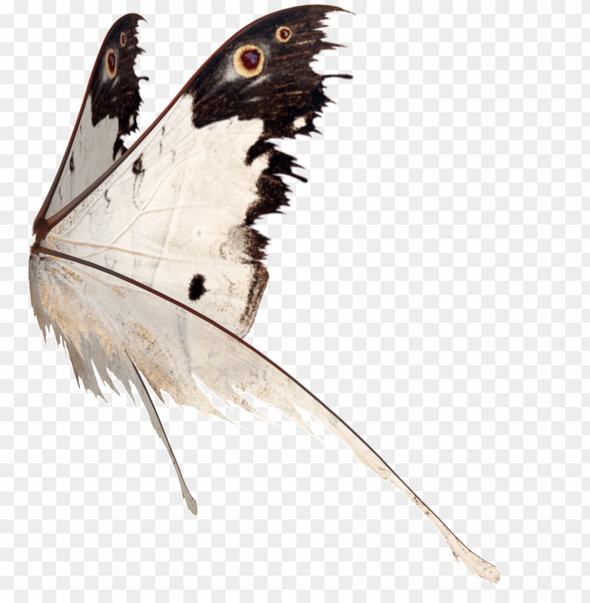 free PNG this graphics is butterfly wings transparent about - butterfly PNG image with transparent background PNG images transparent