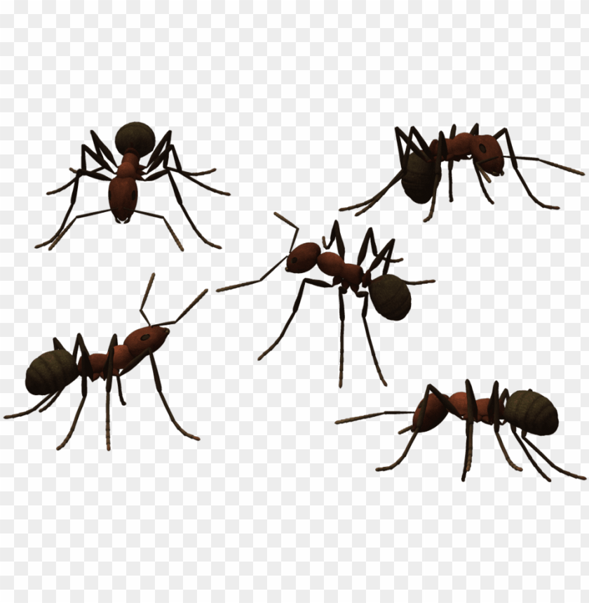 Transparent Ant Clear Png Library Download Ants Png Transparent Background Png Image With Transparent Background Toppng