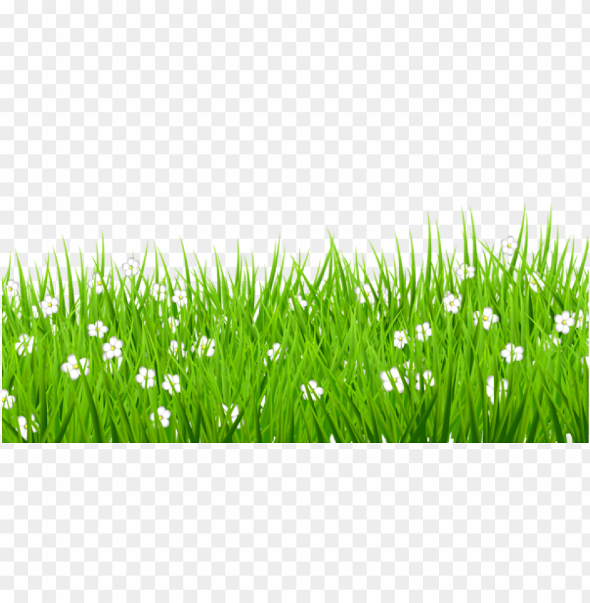 Download Transparent Grass With White Flowers Png Images Background