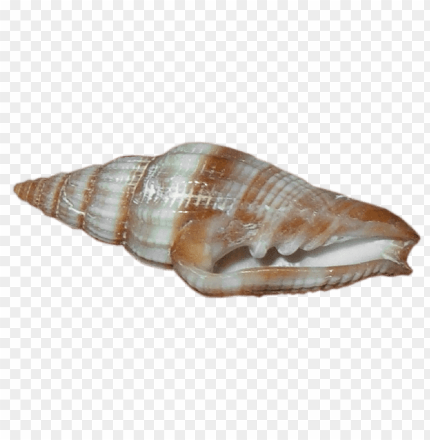 free PNG Download transparent sea snail shell clipart png photo   PNG images transparent