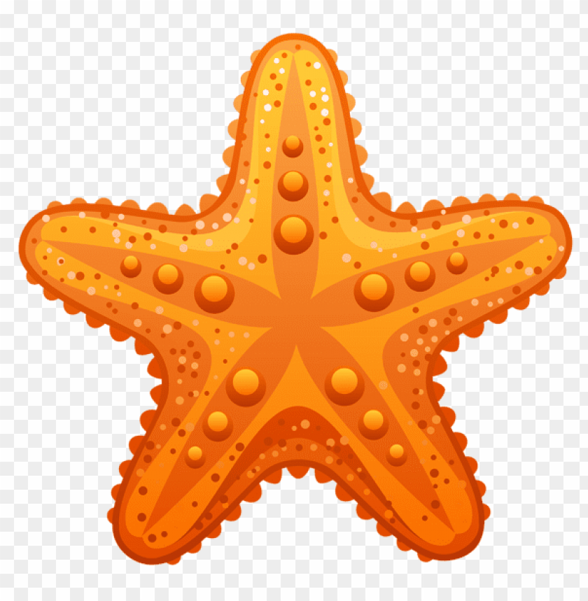 free PNG Download transparent starfish clipart png photo   PNG images transparent
