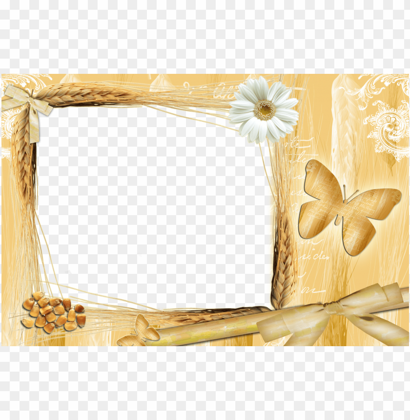 free PNG transparent yellow frame with daisy background best stock photos PNG images transparent