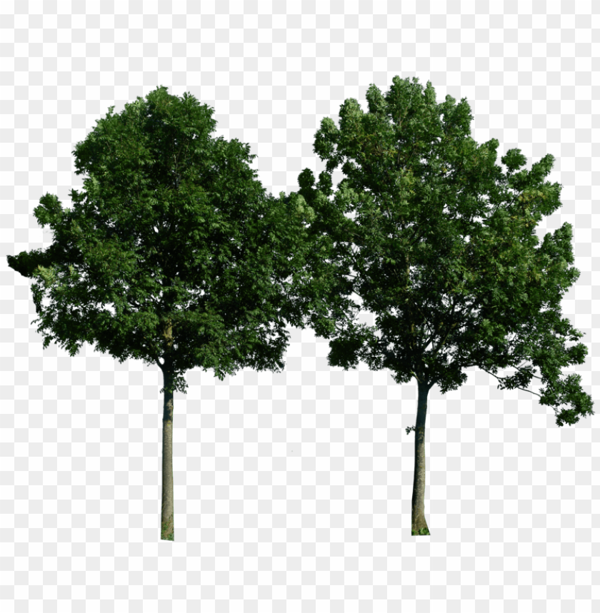 free PNG Download tree png images background PNG images transparent
