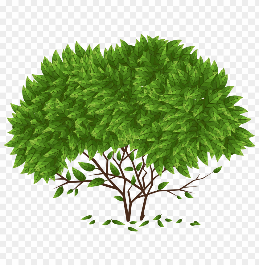 free PNG Download tree clipart png photo   PNG images transparent