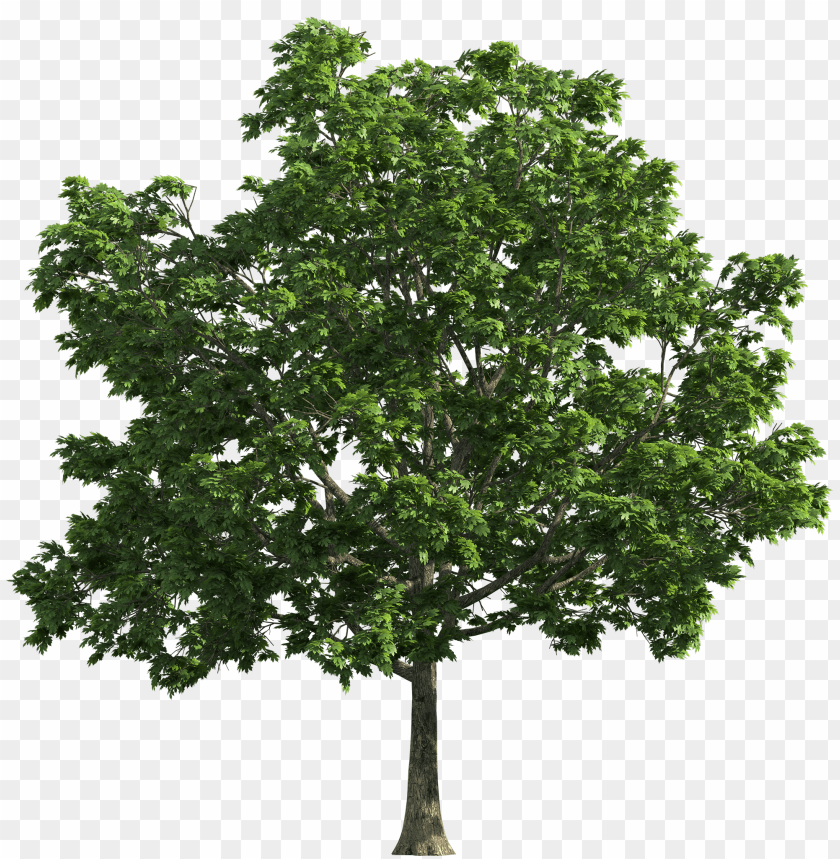 free png tree  clip art PNG images transparent