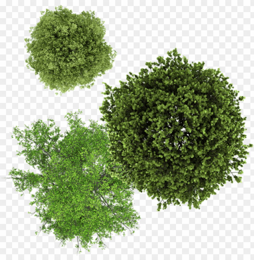 free PNG tree drawing top view PNG image with transparent background PNG images transparent