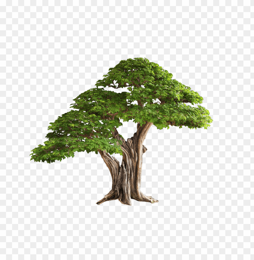 tree images free