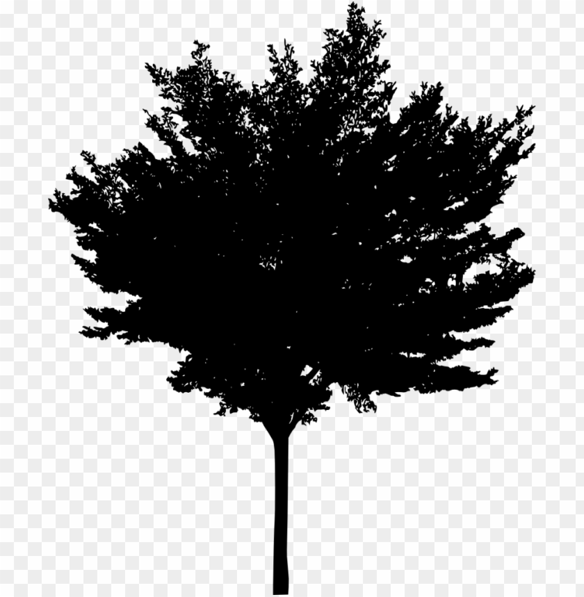 free PNG Tree Silhouette png - Free PNG Images PNG images transparent