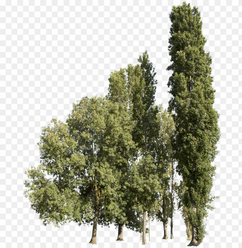 free PNG trees group - cutout trees - transparent group trees PNG image with transparent background PNG images transparent
