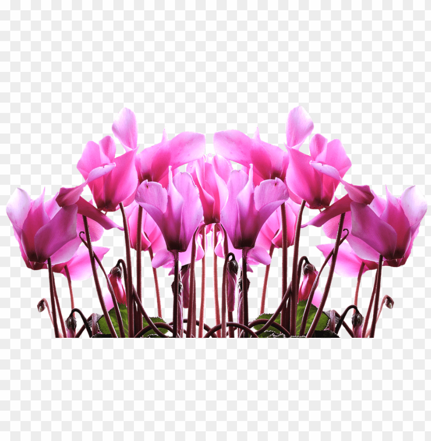 free PNG tulip stencil free 25, - happy mothers day 2018 PNG image with transparent background PNG images transparent