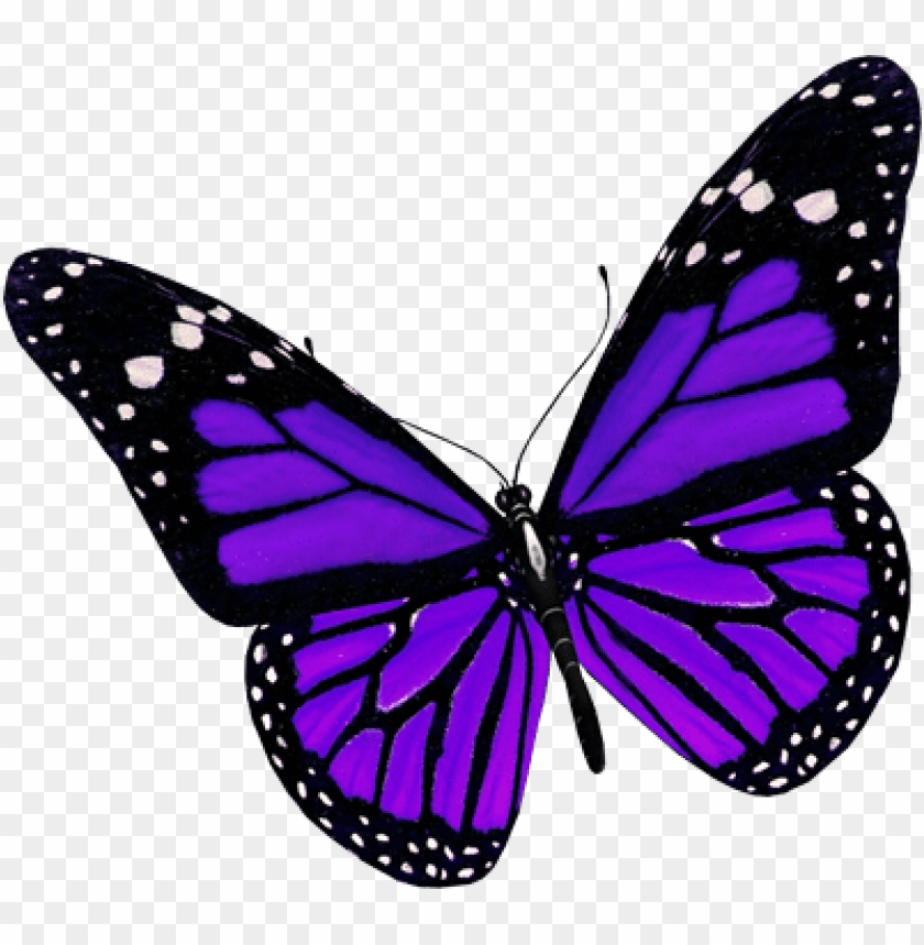 urple butterfly png image - purple butterfly PNG image with transparent background@toppng.com