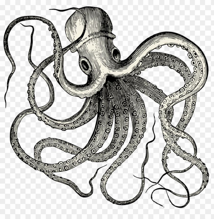 free PNG vintate octopus tattoo PNG image with transparent background PNG images transparent
