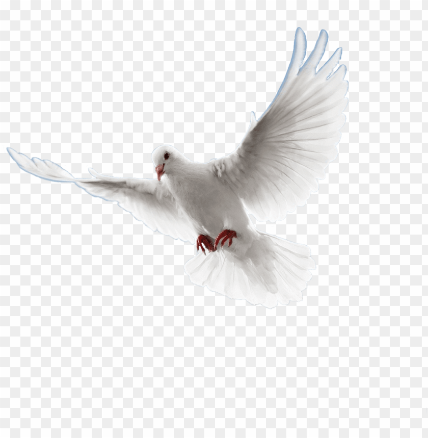 free PNG visitar - paloma png sin fondo PNG image with transparent background PNG images transparent