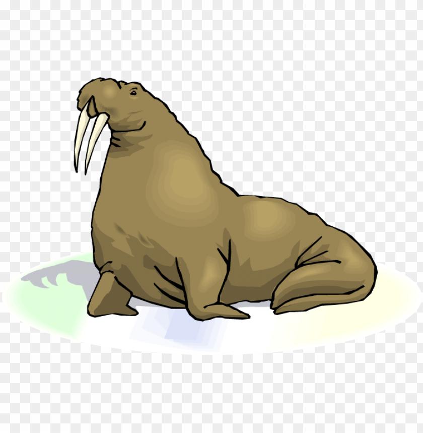 free PNG Download walrus transparent images png png images background PNG images transparent