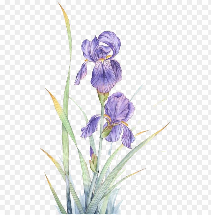 free PNG watercolor painting violet flower - violeta flor watercolor PNG image with transparent background PNG images transparent