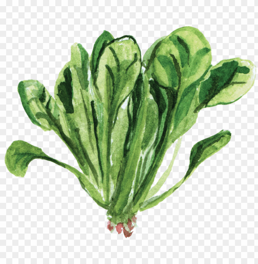 watercolor vegetables png picture black and white download