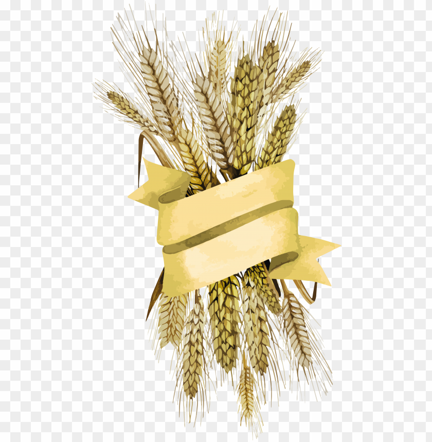 free PNG Wheat PNG images transparent