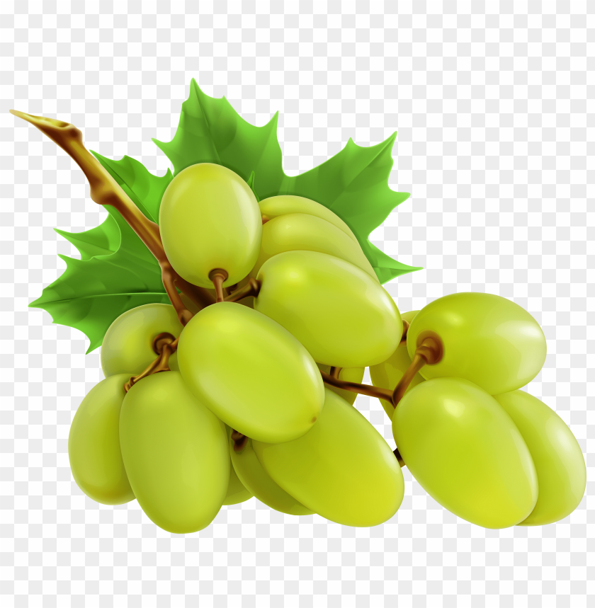 free png white grapes PNG images transparent