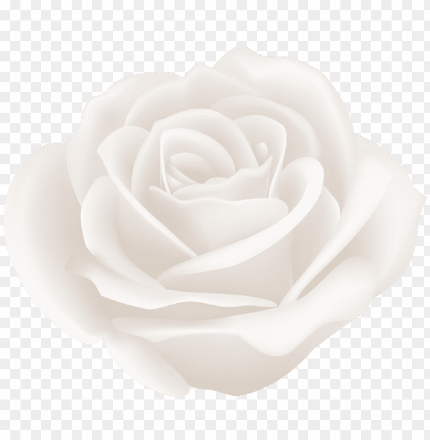 Download White Rose Png Images Background Toppng