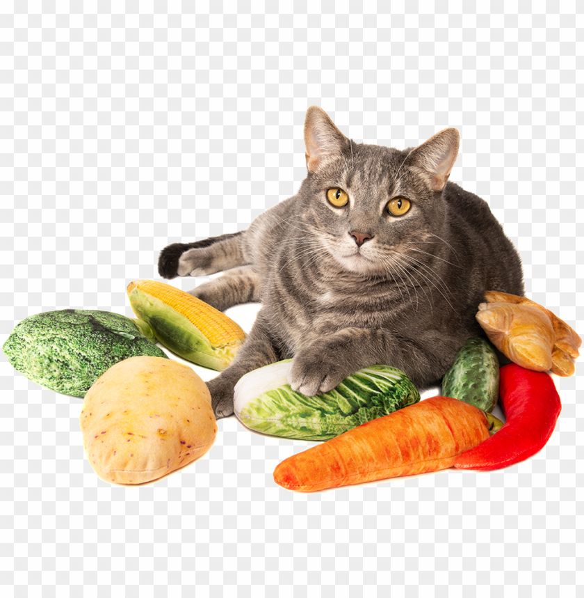 free PNG with silver vine & catnip - cat grabs treat PNG image with transparent background PNG images transparent